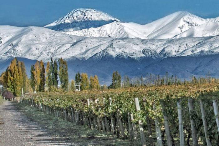 Weinbau am Fuß der Anden
