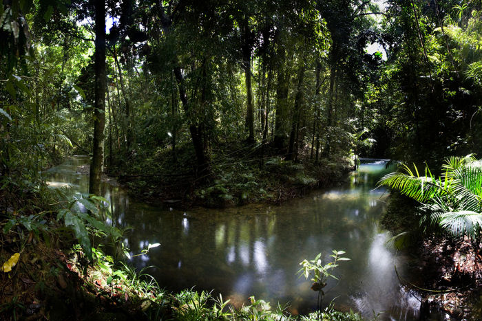 Daintree Nationalpark